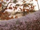 Photo de kbz-sous-la-neige