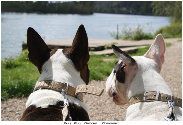 petit sondage pour une amie !!!! Proprio de chiens c'est pour vous!!!!