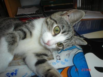 tit et chatte pic noir adolescent chatte trou