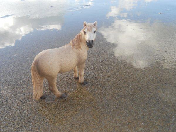 Les chevaux à la mer