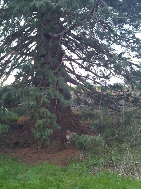 Ballade au Sequoia géant