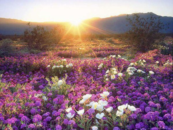Beautiful Wonder...