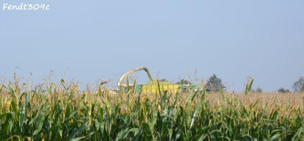 T.Otten à l'ensilage de maïs 2011 !