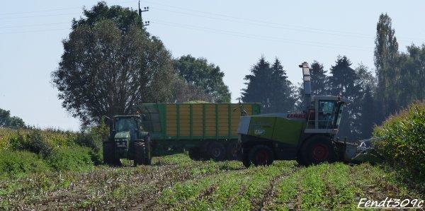 Lacroix à l'ensilage de maïs 2011 !
