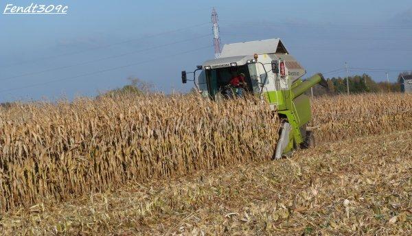Moisson de maïs grain par Otten !