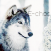 E-chos