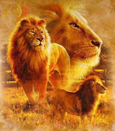 cadeau pour les 19 ans de mon fils Teddy (Lionceau69)