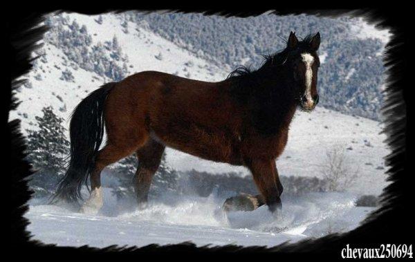 Cheval en hivers