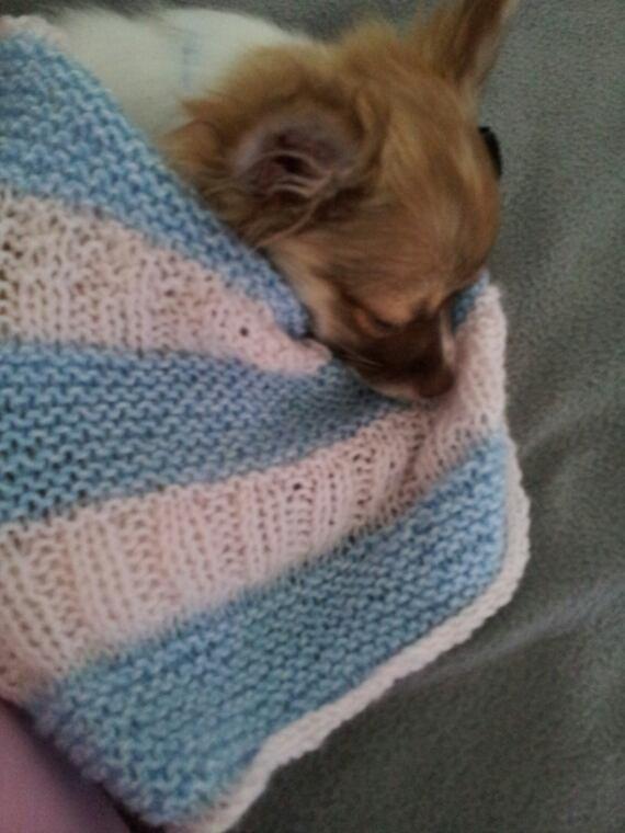 Monoi aime sa couverture que je lui ai tricoté