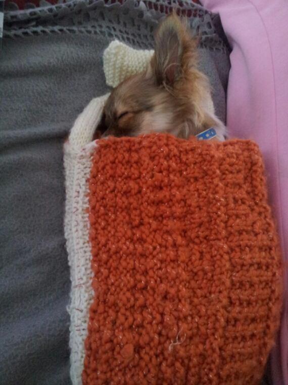 Monoi aime bien le sac que je lui avait tricoté