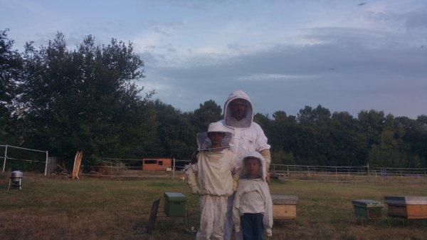 Varroase, Némose et Frelons
