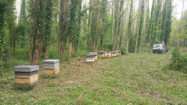 Travail au rucher avec les enfants