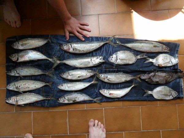 pêche 11 mai 2012