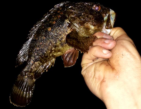 Pêche du 27 octobre 2013