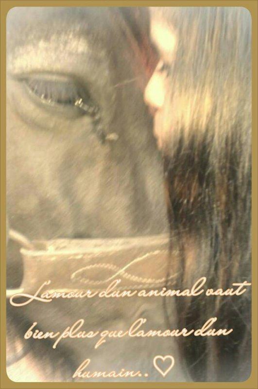 L'amour d'un animal vaut bien plus que l'amour d'un humain .. !♥