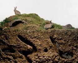 Chapitre 1 amenager l'environnement de son lapin , article 3 les enrichissements