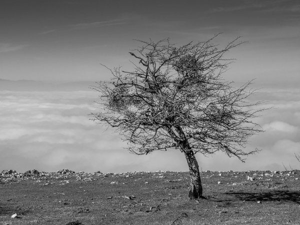 Une aubépine dans les Montagnes basques, près de Vitoria-Gasteiz.