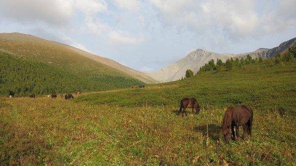 Le Nouvel Altaï