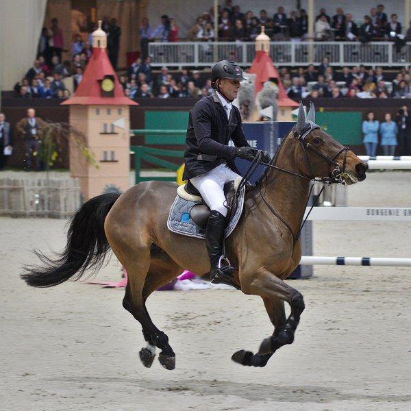 L'Irish Sport Horse