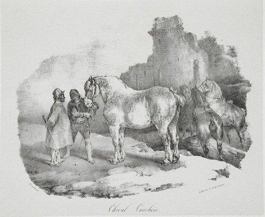 Le Cauchois