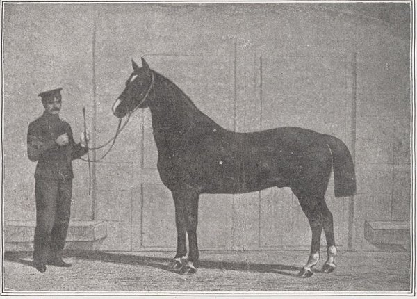 The Norfolk Ph½nomenon