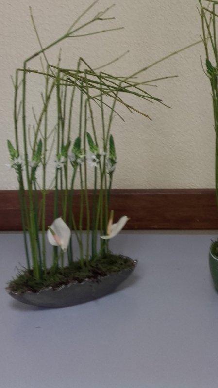 un peu de symétrie avec du cornus verts, des orthinogales, deux petite anthuriums.