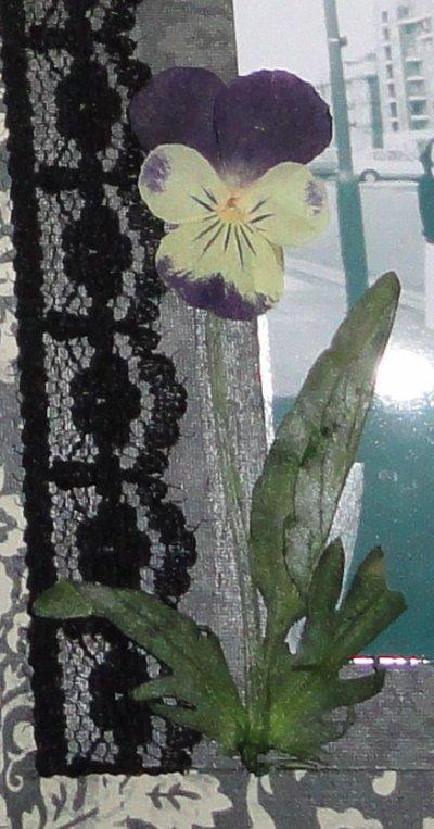 Trucs et astuces: Les fleurs sechées