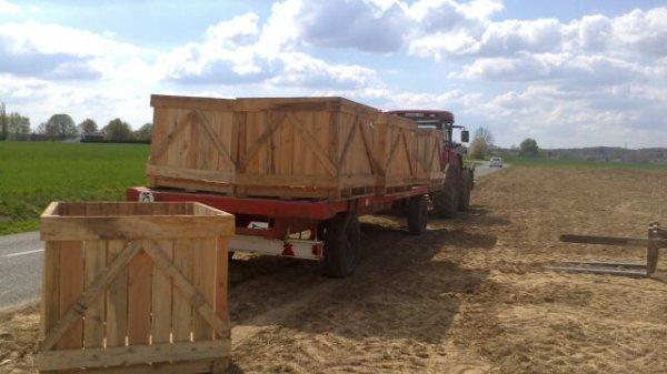 Plantation pomme de terre (suite)