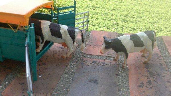 Nouvelle achat :-) bétaillère rolland