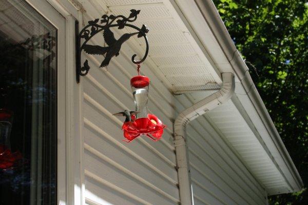 instant colibris