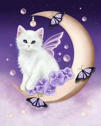 Belle et douce nuit !!!