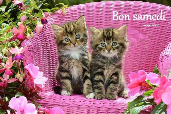 Bon Samedi à vous tous mes Ami(e)s !!!