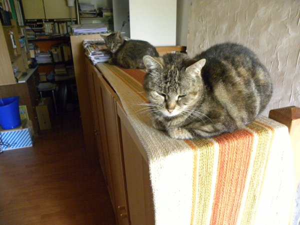 Mes trois chats !!!