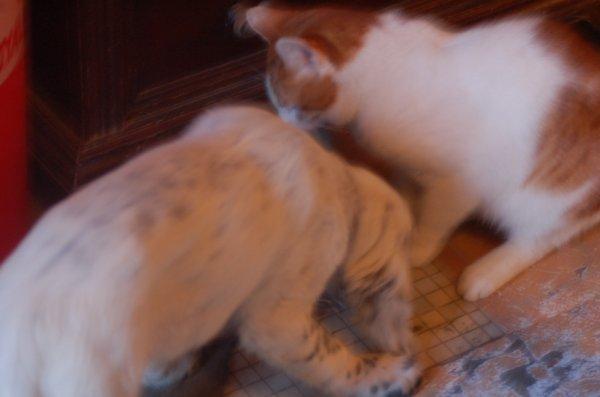 re chien et chat