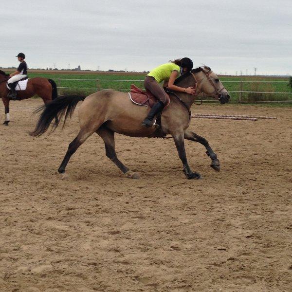 Une vie, une passion, l'équitation !