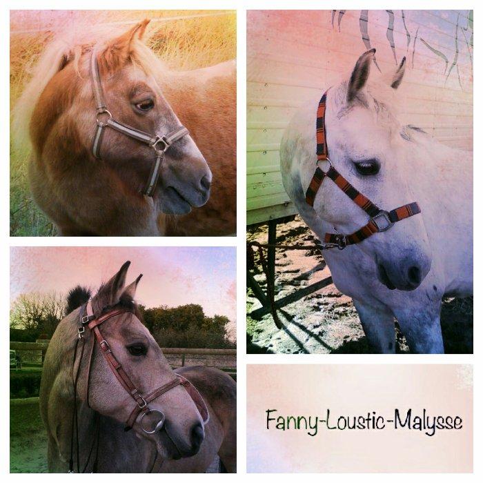 Fanny-Loustic-Malysse