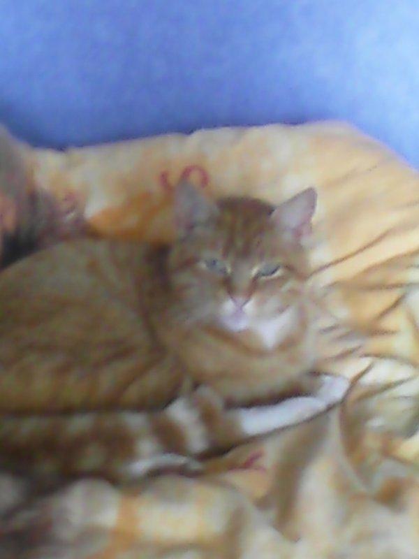 mon chaton tu me manque tellement tout ca a cause d'une sale voiture