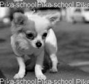 Photo de pika-school
