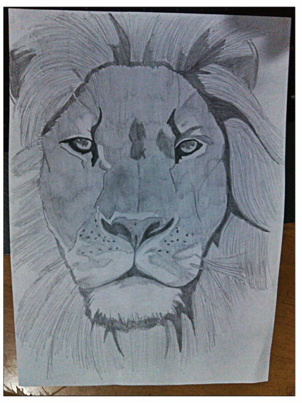 LION #SPEED DRAWING