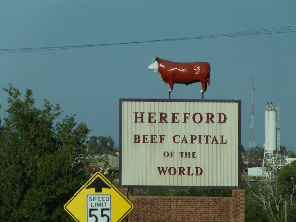 ;)    Hereford: la capitale du Boeuf dans le monde    ;)