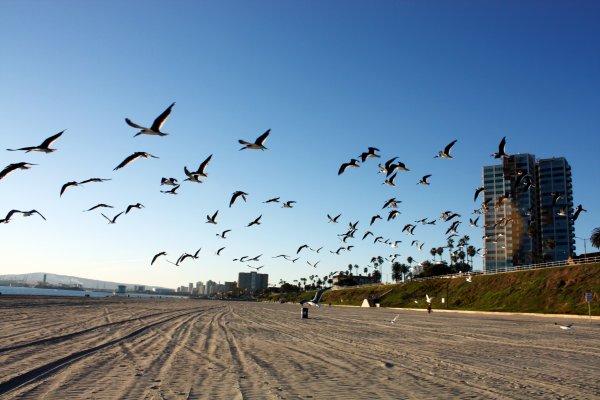 ";)    Direction ""Long Beach"" en Californie...    ;)"
