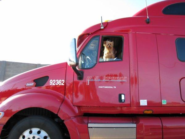 :)    Le meilleur ami du... American Trucker !!!    :)