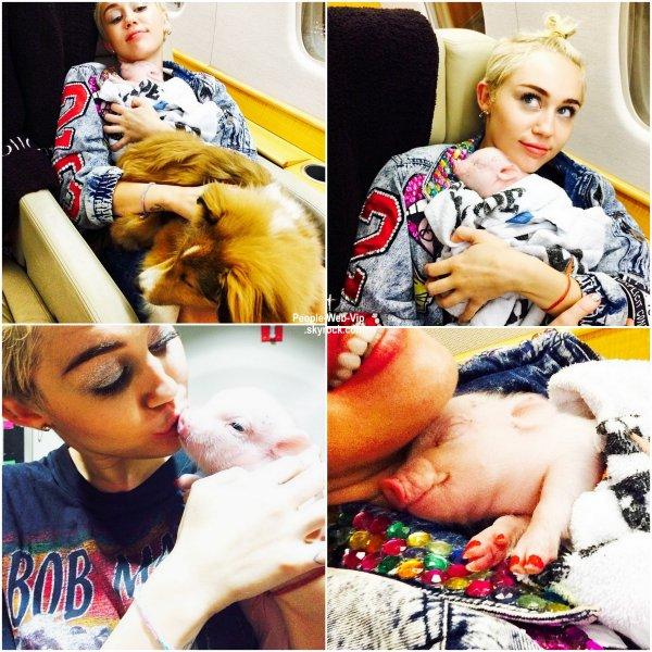 """"""" BUBBA SUE """" Miley Cyrus a adopté un porcelet de compagnie nommé Bubba Sue et elle bien sûr partagé un tas de photos de l'animal sur son compte Instagram."""