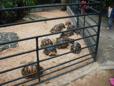 Admirez:tortues,singes,crocodile etc...Si vs aimez bah.. Vs allez vs régaler dans ce cas!!sisi c a lile morice tt ca!!!