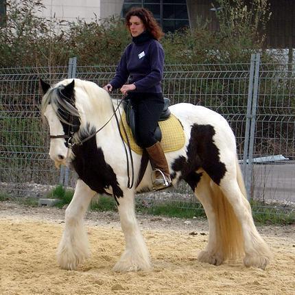Ferme Equestre Le Bois d'Ambre