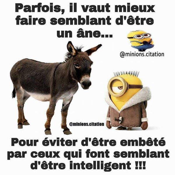 """l""""âne"""