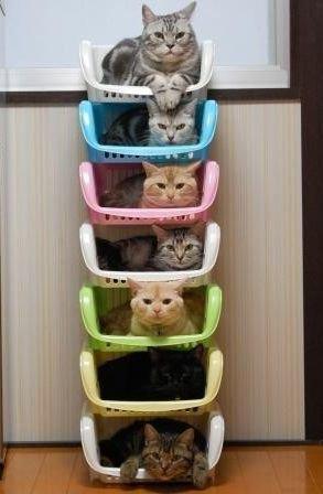 lits pour chats !
