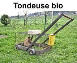 tondeuse