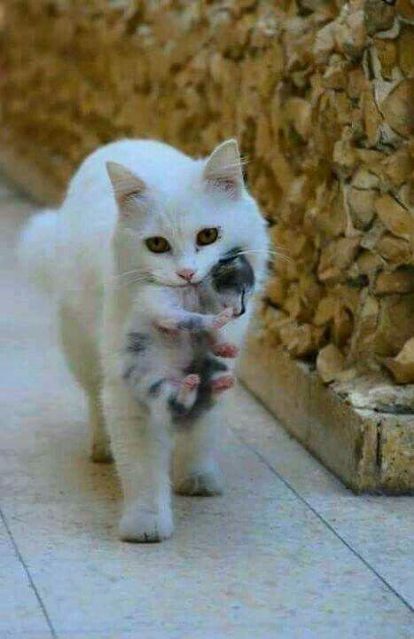 sur les chats