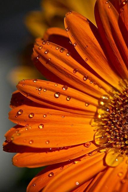 la couleur orange